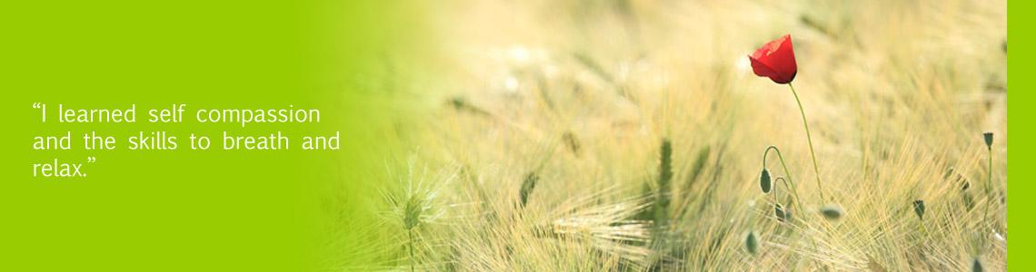 Red poppy in field of barley